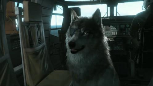 mgsv_tpp_поиск-d-dog-дикая-собака