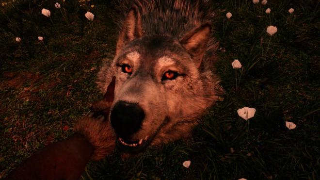 Far Cry Primal как приручить Белого волка